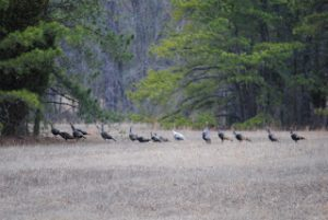 Atlantic County Game Preserve – This Site is Under Development